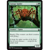 Canopy Spider [BBD]