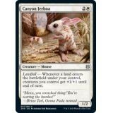 Canyon Jerboa [ZNR]